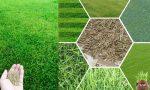 Çim Çeşitleri (Grass Varieties)