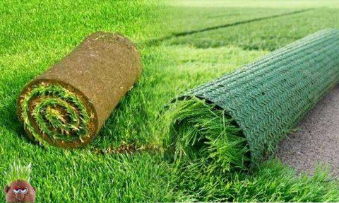 doğal çim, yapay çim