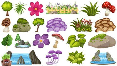 Süs bitkisi, süs bitkileri