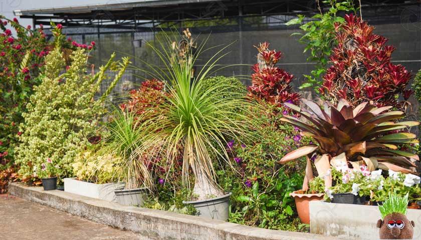 bahçe süs bitkileri